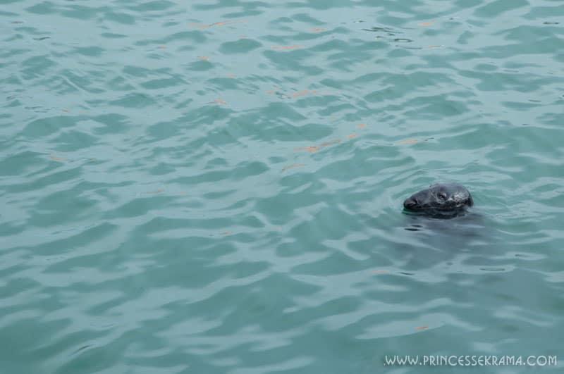 Visiter les environs de Dublin : Lion de mer à Howth