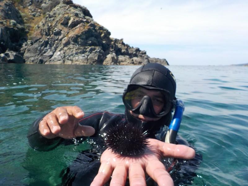 Plongeur oursin