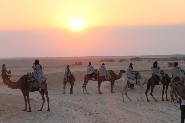 Balade chameaux Tunisie