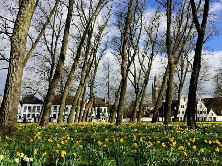 Visiter Bruges pour le béguinage - Petit bois fleuri au béguinage