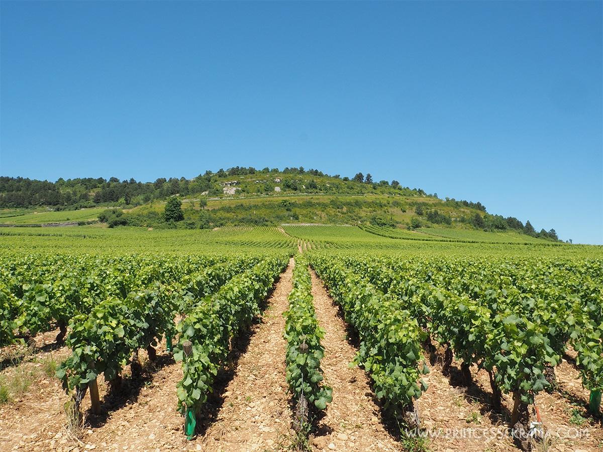 Vignes de Beaune