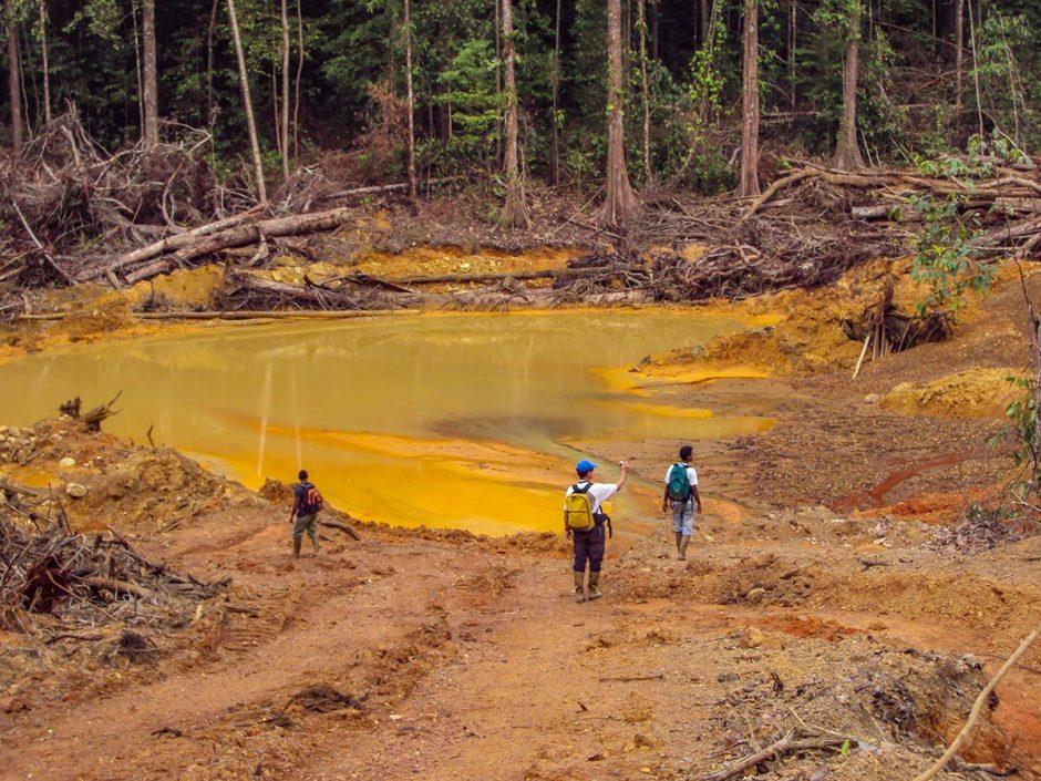 Mine d'or en Guyane et déforestation