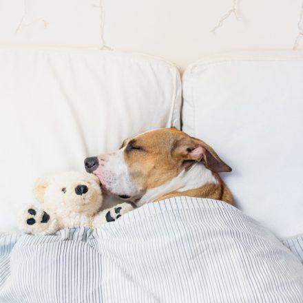 Comment bien dormir pour rester en forme