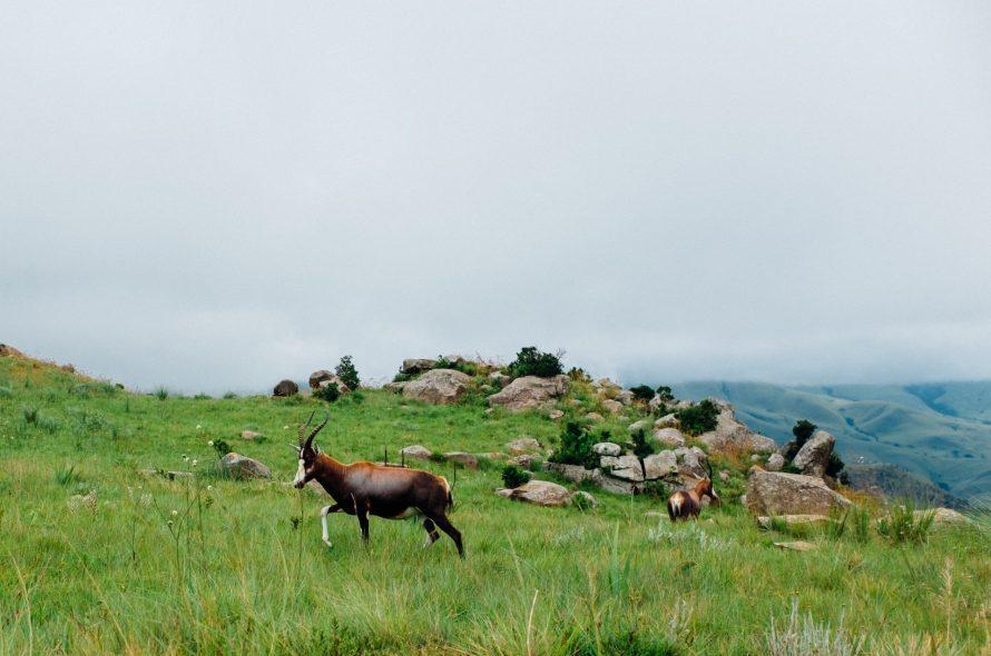 10 choses à voir et à faire au Swaziland (Eswatini)